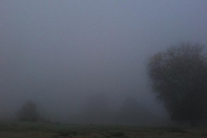 Fog picture